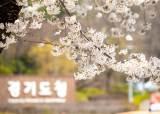 코로나 2년차, 올해도 봄꽃 축제 못 본다