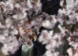 꽃놀이 시즌에 긴급사태 해제한 日…'벚꽃 확산' 비상