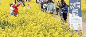 코로나 사태 이후 두 번째 봄, 꽃밭은 그만 엎자