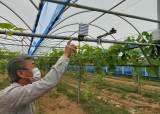 포도밭 비가림, 농가들 고성능 직조필름 'SKYCAP' 씌운다.