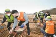 [사진] 중앙그룹·농협 임직원들, 코로나 인력난 인삼농가 돕기 봉사