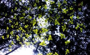 초록이 움트는, 수목원 가기 딱 좋은 계절