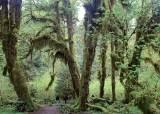 [한 컷 세계여행] 1m 넘는 이끼가 사는 숲, 나무 정령이 살 것 같은 초록 세상