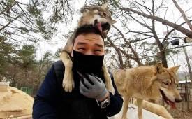 사나운 한국 늑대, 강아지로 만드는 이 남자눈빛만 봐도 통하죠
