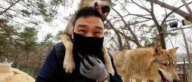 """사나운 한국 늑대, 강아지로 만드는 이 남자…""""눈빛만 봐도 통하죠"""""""