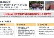 4·5월 멧돼지 출산기에 기온도 상승…ASF 긴장감 고조
