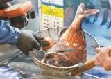 오염수 동해 유입 시기 불분명…해양생물 체내 축적 우려 커