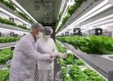 스마트팜이 밭보다 생산성 30배…장마철 '금채소값' 잡는다
