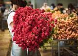 """코로나 덕에 '꽃'에 꽂혔다…""""온라인 꽃 판매 63% 증가"""""""