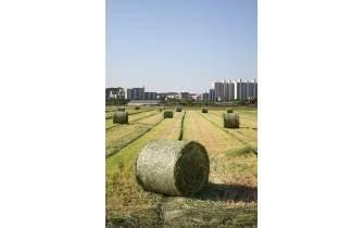 """[더오래]""""기후 위기에 취약한 서울, 도시농업이 돌파구"""""""