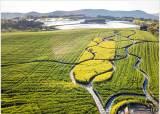 [조용철의 마음 풍경] 하늘에서 내려다본 고창 학원농장 청보리밭