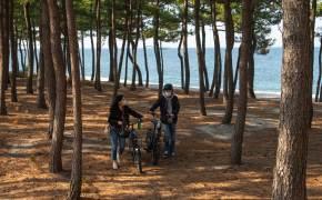 앱 하나로 자전거 대여, 맛집 정보까지…강릉 여행이 편해진다