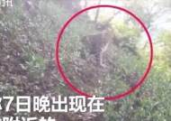 """표범 3마리 탈출했는데 1주일 숨긴 中동물원 """"어려서 괜찮다"""""""