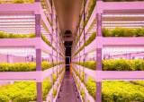 한국형 스마트팜의 쾌거…중동 사막에 수직농장 짓고 채소 재배