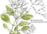 [소년중앙] 녹음이 짙어지는 5월, 흰색 꽃이 많이 피는 까닭은