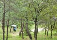 [한 컷] 조선왕릉 숲길 걸어보세요