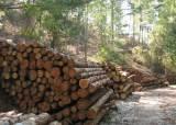 """""""탄소 흡수 못하는 늙은 나무 베자""""는 산림청···환경부가 제동"""