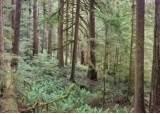 미, 목재 생산과 숲<!HS>보전<!HE> 균형 찾는 세계 최대 규모 실험한다
