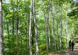 국형사로 통하는 '비밀의 숲'…치악산 둘레길이 열어준 비경
