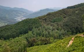 굽이굽이 둘레길 끝자락엔, 치악산 '비밀의 숲'