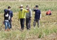 마늘·양파 썩는데 외국인 59명 집단감염…일손 부족에 農心 탄다