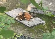 고양이 토막내 보란듯 전시…올림픽공원 뒤집은 끔찍 광경