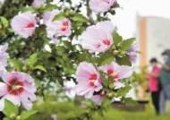 [사진] 나라꽃 무궁화 활짝