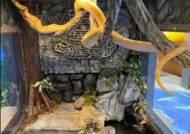 美 아쿠아리움서 3.7m 왕뱀 탈출···사흘째 오리무중