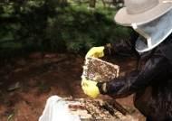 LS·아모레·포르셰·벤틀리의 공통점은?…왜 꿀벌을 키울까