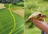 거북이 웃픈 가출···1년뒤 900m밖 발견, 시속 11㎝ 속도였다