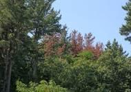 솔잎 하나면 오늘 대기 오염도 확인?…측정 기술 개발됐다