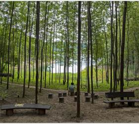 [조용철의 마음 풍경] 아내 생일선물로 시간 멈춘 숲길을 걸었다