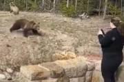겁도 없이 불곰 '찰칵'···이 사진 한장 때문에 1100만원 벌금
