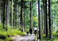숲이 내뿜는 피톤치드 고혈압·천식에 효과