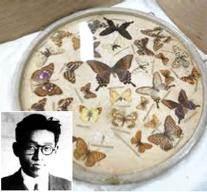 평생 75만 마리 나비 채집 … 전쟁 때도 피난 안 가고 표본 지켜