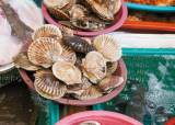 새조개·개조개 … 쫄깃하고 달콤 국물은 피로회복제
