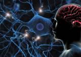 치매·우울증 치료 길잡이 '뇌 지도' 만든 일등공신