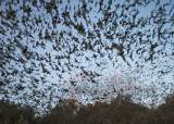 낙타는 공범 수준 … 메르스 발병 주범 알고보니 박쥐