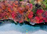 빨강 주황 노랑, 나무들의 패션쇼
