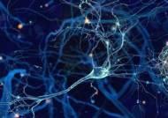 뇌에 칩 심어 전기 자극 주면 기억력 좋아진다