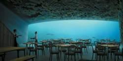 바다 밑 5m에서 즐기는 청정 북해