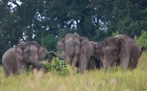 정글서 노니는 야생 코끼리 떼, 심장이 쿵쾅 뛰었다
