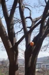 봄 햇살 따뜻한 마당, 점령군 잡초와 싸우려니 머리가 '지끈'