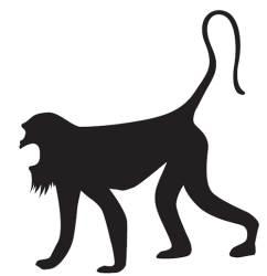불확실성 해결? 고함원숭이는 독 있는지 한 마리가 먼저 시식