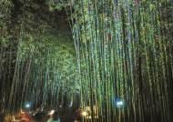 은하수 흐르는 십리대숲