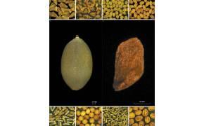 700살 연꽃 씨앗, 550살 철쭉 씨앗…올해의 '관심 종자'