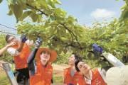 [사진] 코로나로 힘든 농촌 일손 돕기 봉사