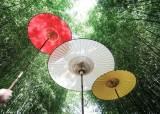 우산도 하늘과 땅 차이…1200원부터 7000만원까지