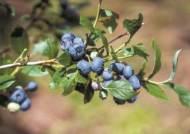 블루베리 육수 물회, 아란치니 삼계탕…색다른 '야생의 맛'