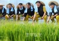 '입춘' 임금님표 이천쌀, 전국 첫 모내기